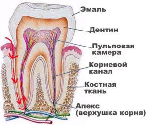 pulpit-zuba-chto-eto-takoe-kak-lechit